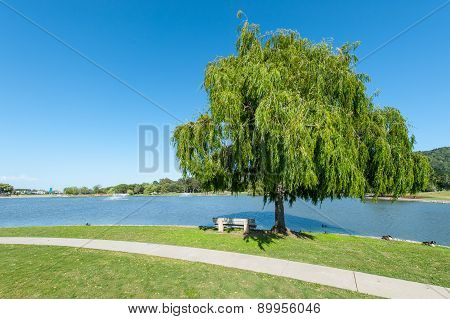 Park With Lake, Fountains Tree And Grass