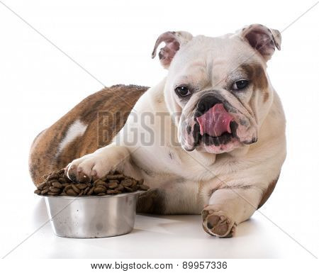 feeding your pet - bulldog puppy laying with pay in dog bowl