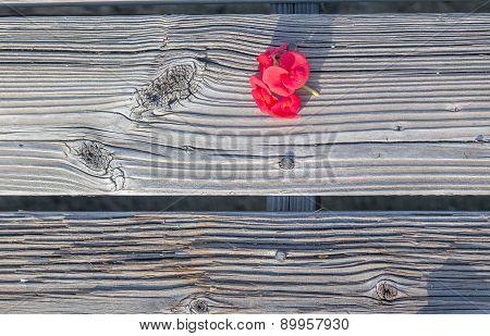 Red flowers on worn hardwood planks.