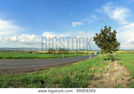 Road and Fields