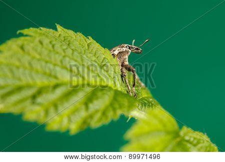 Beetle Resting On Leaf