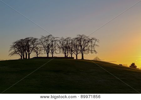 Silhouette of Elm Grove at Woodland Cemetery in Stockholm, Sweden during sunset