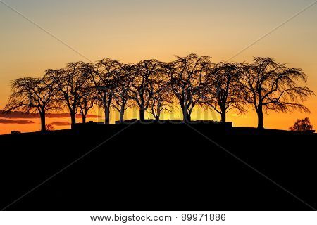 Silhouette of Elm Grove at Woodland Cemetery in Stockholm, Sweden during golden sunset