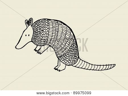 Hand Drawn Armadillo, Vector Illustration