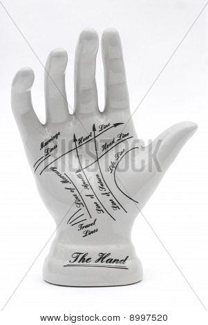 Phrenology Hand