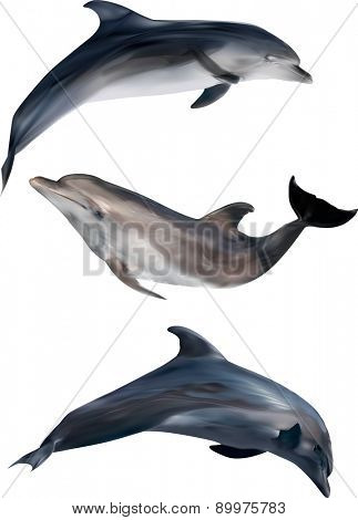 illustration with dolphins isolated on white background