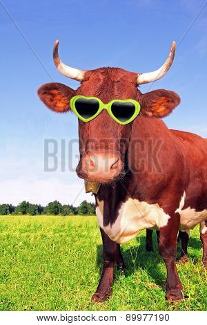 Funny Cow With Green Spectacles