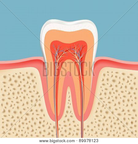 Vector Tooth