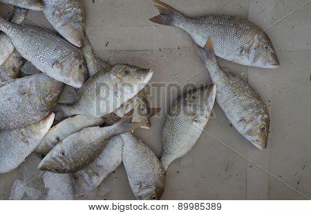 bream on  fish market