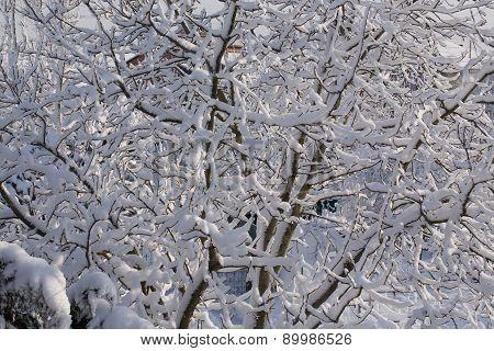 tree brunches under snow