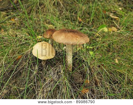 Mushroom Time To