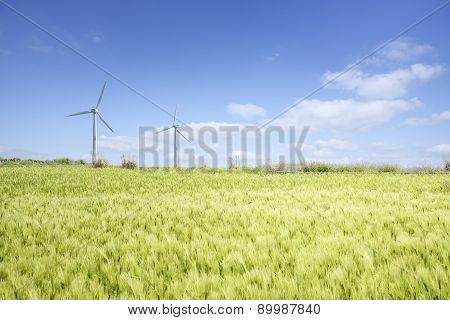 Landscape Of Green Barley Field