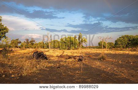 Landscape, Botswana