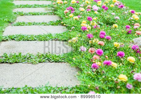 Pathway With Gardening Blooms
