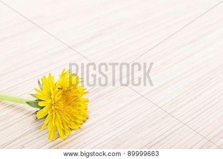 Dandelion On Wooden Ground