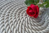 pic of arum lily  - Beautiful red rose lily over rope and wooden table - JPG