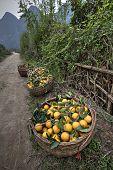 image of harvest  - Yangshuo Guangxi China  - JPG