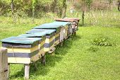 image of beehive  - Apiary with bee beehives on the of mountain - JPG