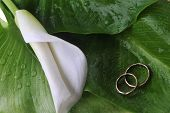 stock photo of calla  - white calla lily and wedding rings on green leaves close up - JPG