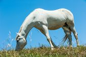 stock photo of eat grass  - Horse standing on a hill eating grass - JPG