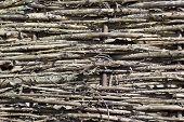 picture of plexus  - fragment of fence plexus branches in the village - JPG