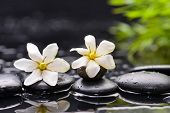 picture of gardenia  - Still life with two gardenia with green plant on black pebbles  - JPG