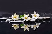 pic of fukushima  - Set of three gardenia with therapy stones  - JPG