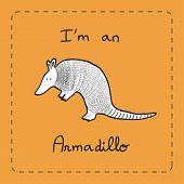 stock photo of armadillo  - I - JPG