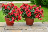 pic of planters  - Colorful planters on the patio - JPG