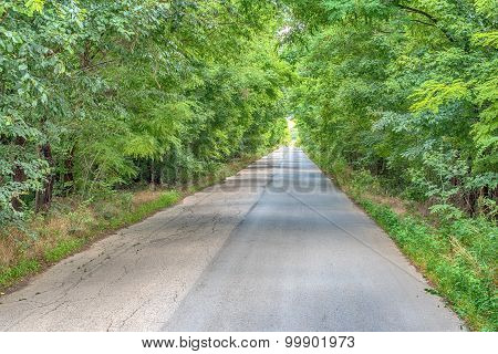 A road through forest