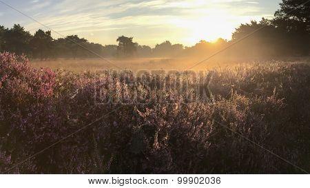 Bright Sunrtise Over Moorland