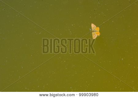The Butterfly In A Trapped