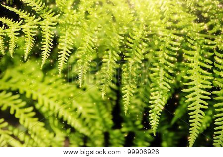 Magic Fern