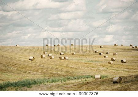 Agricultural Farm Field