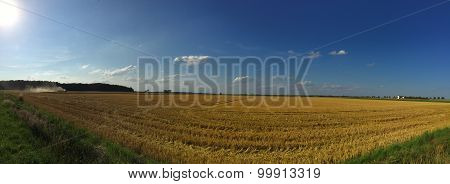 Harvest (panoramic)