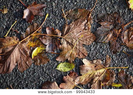 Yellow and gold leafs, autumn background