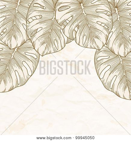 Vintage Background. Old Crumpled Paper With Leaves Monstera With Outline In The Corner.