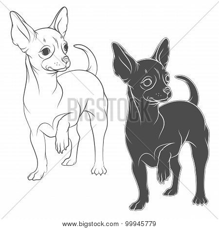 Vector drawing of a chihuahua. Isolated objects on a white background.