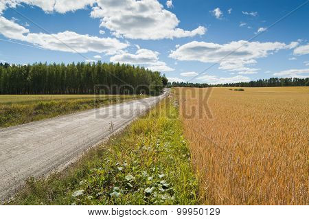 Rural landscape with cornfield and road