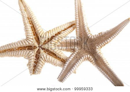 Dry Starfish Isolated On White Background
