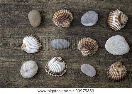 Sea Shells And  Pebbles On An Old Wooden Plank
