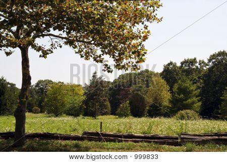 Lazy Meadow