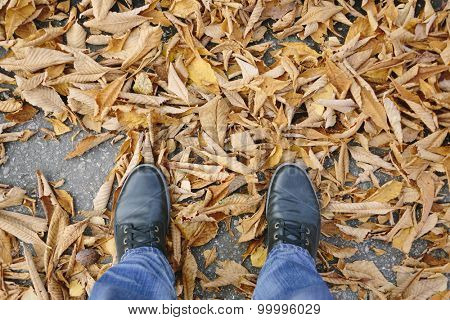 autumn shoes and leaves