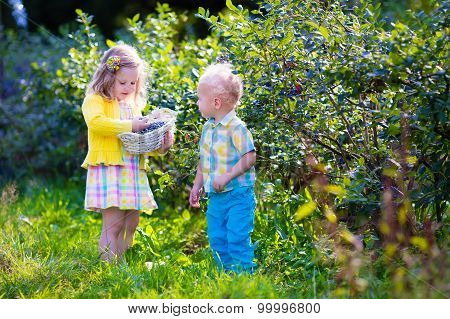 Kids Picking Blueberry