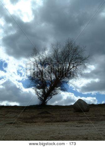 Árbol dramática